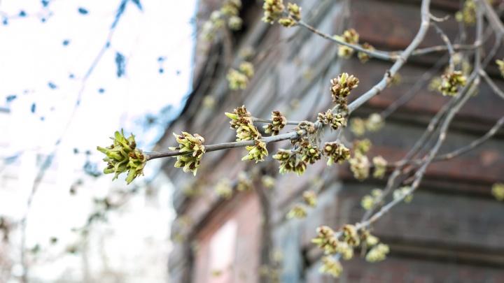 Красноярцы поздравляют друг друга с первым днем весны в -23