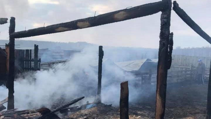 Ферму «Коза-дереза» в Красноярске ночью подожгли