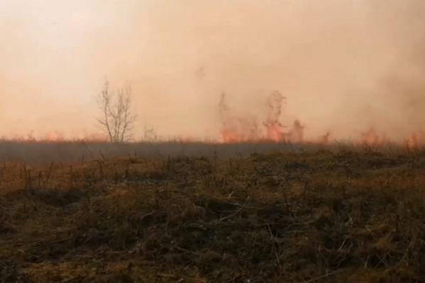 Совсем рядом с горящей травой находятся жилые дома