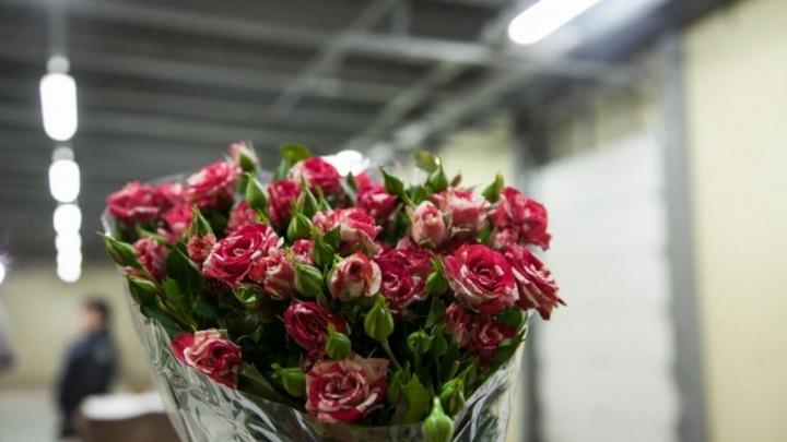 На въезде в Екатеринбург задержали 17 тонн запрещенных слив и розы с вредителями