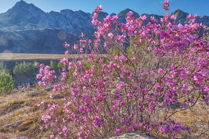 Горы в пурпуре (фото)