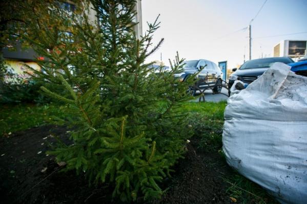 Выиграть деревья городу помогли экоактивисты, вложившие деньги в платную раскрутку голосования