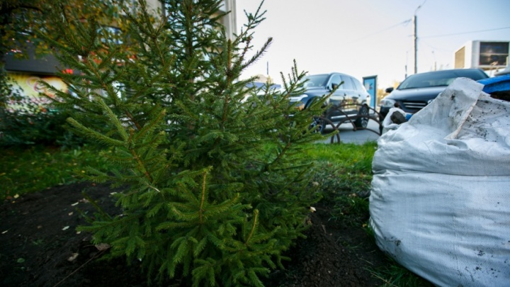 Тысячу деревьев, выигранных тюменцами в конкурсе, высадят осенью в Антипино