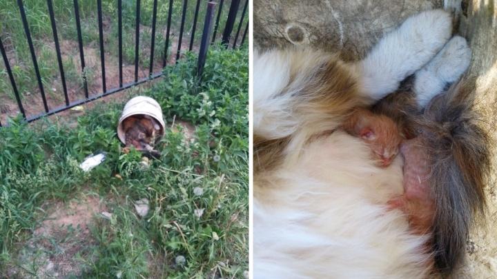 В Ярославле кошка родила котят в маршрутке. И её выкинули на конечной