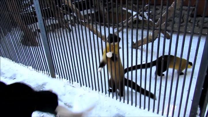 Просто им скучно: две харзы из Новосибирского зоопарка попытались вырвать платок из рук посетителя