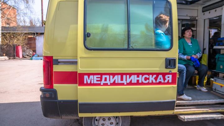 «Укусил за кончик носа»: в Тольятти доберман набросился на мужчину