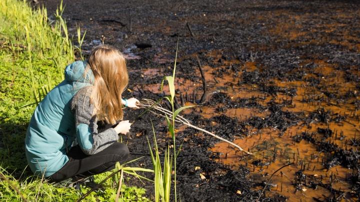 Расползлось ещё шире. Нефтяное озеро в Ярославле месяц спустя: что изменилось