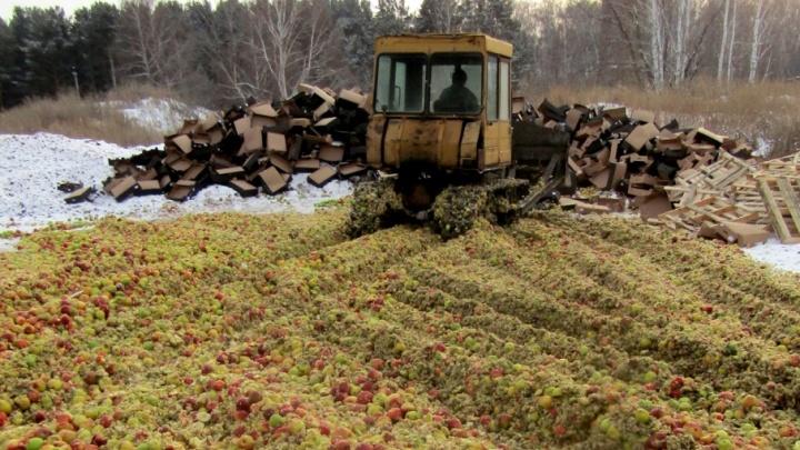 Шпик и яблоки из Европы пустили под бульдозер в Челябинской области