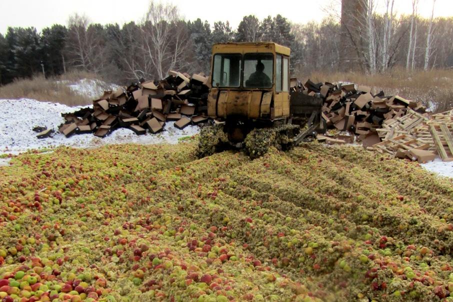 Под бульдозер отправили 18 тонн яблок из Европы