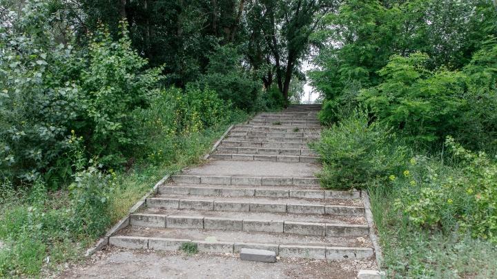 Запомните его таким зеленым: в Волгограде на склоне поймы Царицы вырубят сотни деревьев