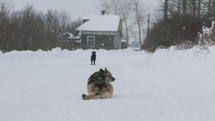 Грустные собаки и заметенные улочки: как живет зимой «исчезающий» Кегостров