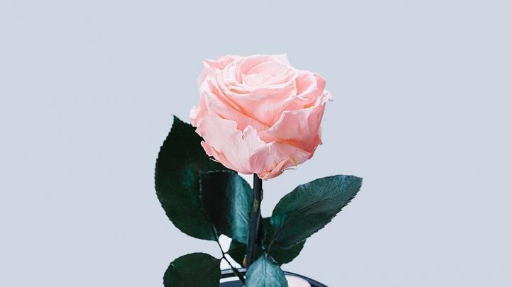 Юноши ограбили цветочный магазин в Самаре, чтобы порадовать своих возлюбленных
