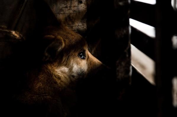 Животные живут в западне уже два месяца