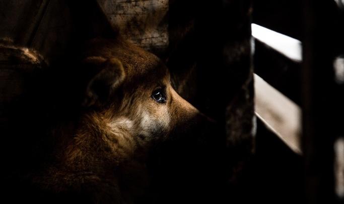 «Раньше их было больше»: щенки оказались в ловушке под теплотрассой и живут там уже 2 месяца