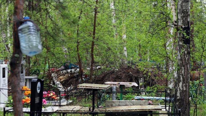 С курганских кладбищ вывезено уже больше 840 тонн мусора, в планах — еще 1127 тонн