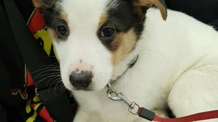 Ярославцев просят помочь бездомным собакам попасть на акцию-раздачу