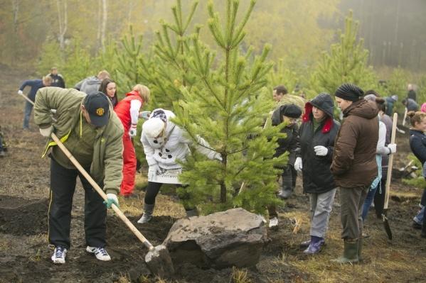 Еще год назад ученые предрекали провал массовых посадок деревьев