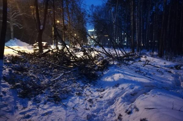 На улице Пирогова во время сильного ветра упало дерево