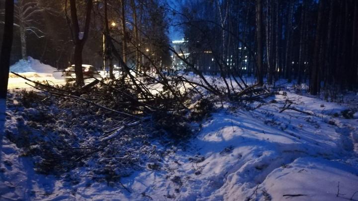 Упавшие деревья и сорванные баннеры: спасатели ликвидируют последствия ночного урагана