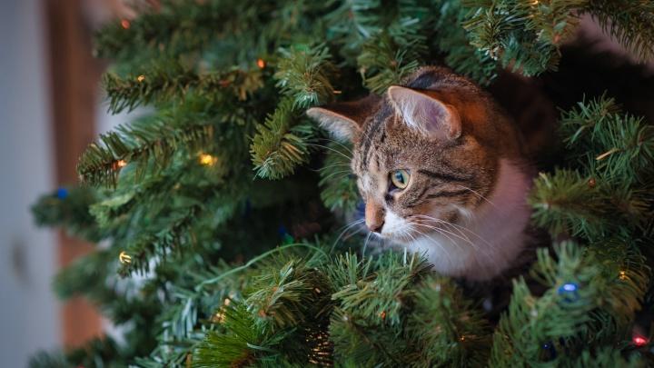 Милые и недорогие подарки на Рождество: что купить, за сколько и где