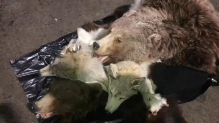В Курганской области таможенники задержали чучела животных, которые везли в Зеленоград