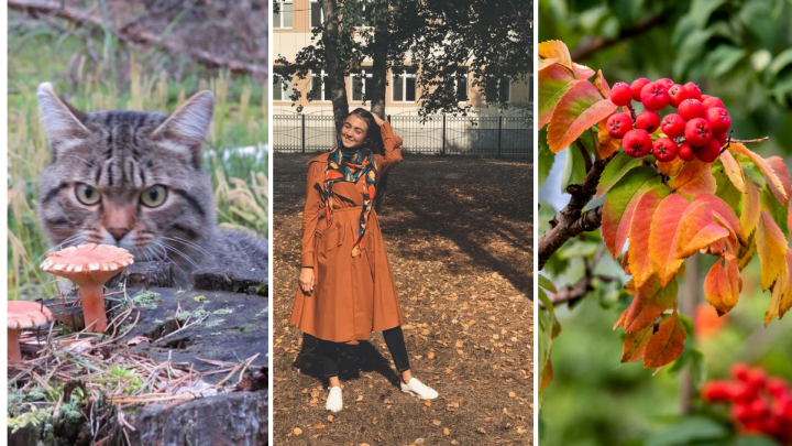 Тюменки в рябине и осенний хмурый кот: 23 снимка, от которых пахнет сухими и пожелтевшими листьями