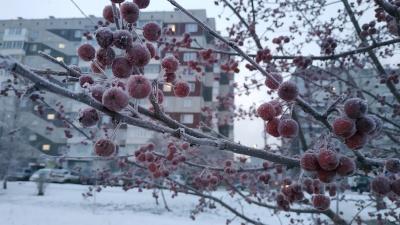 Зимняя сказка: любуемся морозными пейзажами Красноярска