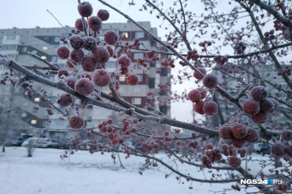 Город покрылся инеем из-за сильного мороза