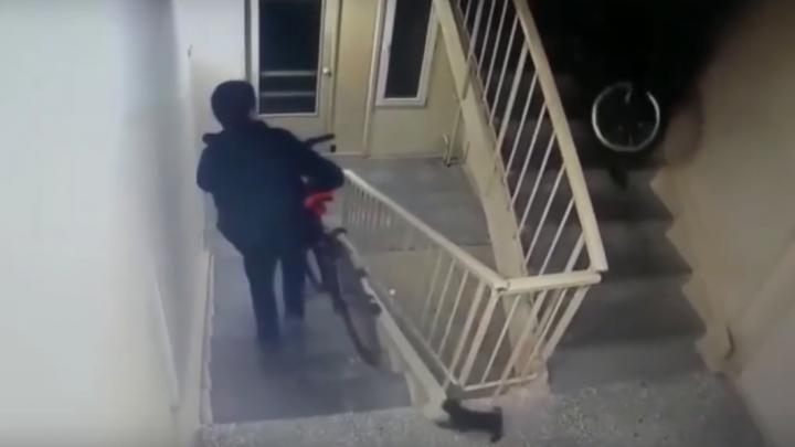 «Котята к хищению не причастны»: полиция задержала омичей, которые воровали велосипеды