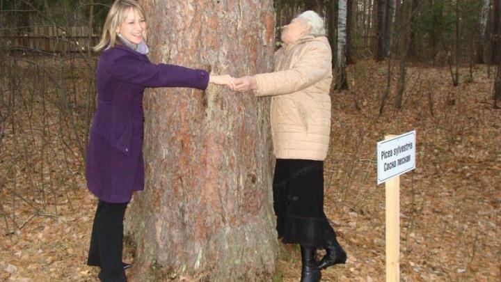 Сосна из Просветского дендрария признана «Деревом— памятником живой природы»
