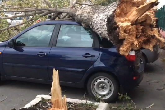 Большую часть машин в Челябинске из-за ураганного ветра завалило падающими деревьями