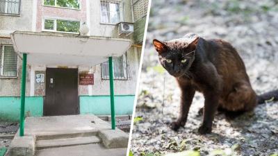 В Ростове женщина выкинула 20 котов из своей квартиры