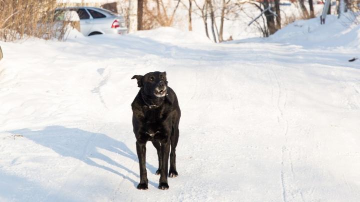 Собака набросилась на первоклассника, который шёл в школу: мальчик в больнице