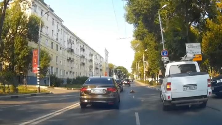 В центре Самары косуля погибла под колесами авто