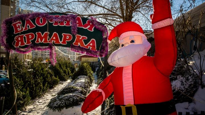Где купить ёлку в Новосибирске: публикуем карту ёлочных базаров