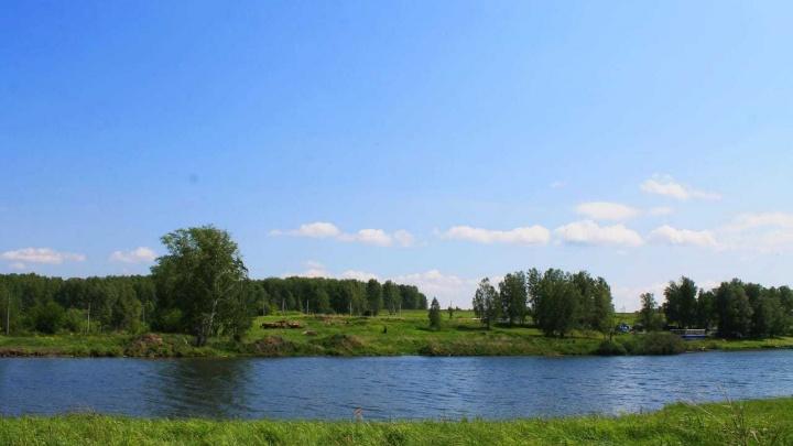 Под Новосибирском появился поселок, где нет заборов — вместо них молодые березки