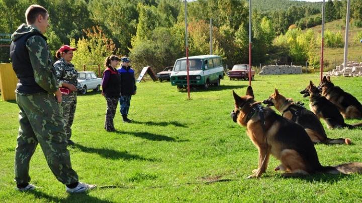 В полиции подняли архивы и рассказали, когда первая собака начала искать преступников в Красноярске