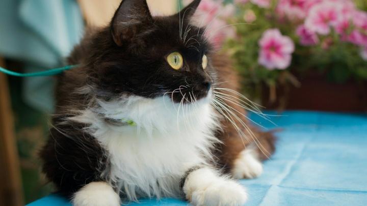 Котенок в придачу: художники устроили благотворительную акцию, чтобы помочь бездомным животным