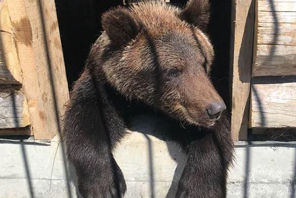 Вместе с подсобным хозяйством продают и медведя