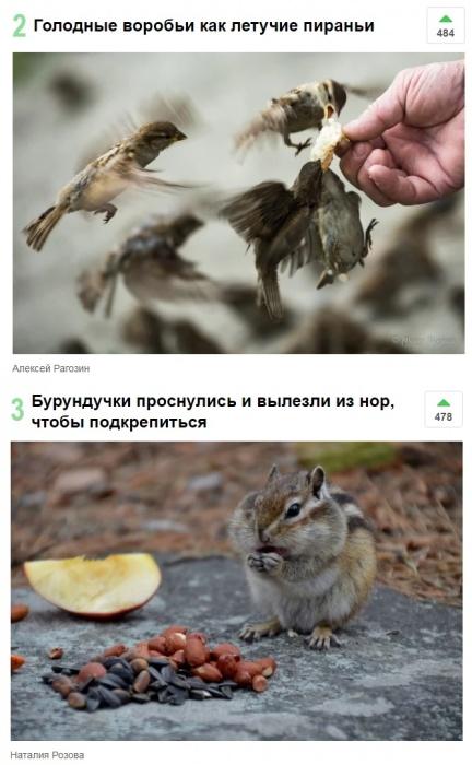 Птицы и грызуны оказались топ-3 нашей фотоподборки