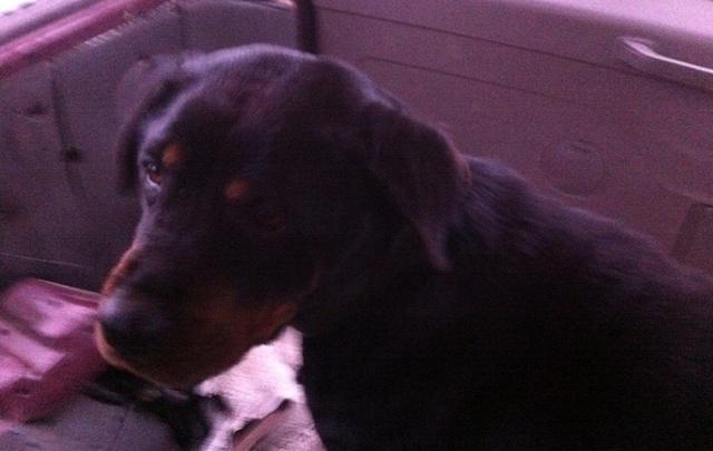 В Стерлитамаке спасли пса, который застрял посередине реки