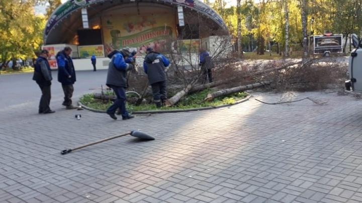 В центре парка «Берёзовая роща» спилили засохшие ели