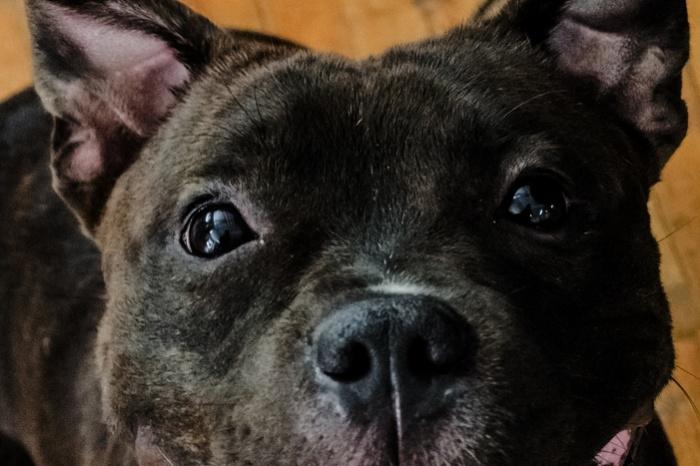 Собака гуляет по ОбьГЭСу без намордника и хозяина
