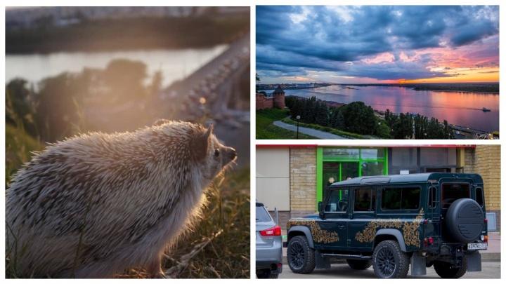 Ёжик-стражник, автохохлома и охота на закаты: лучшие снимки недели от нижегородских фотографов