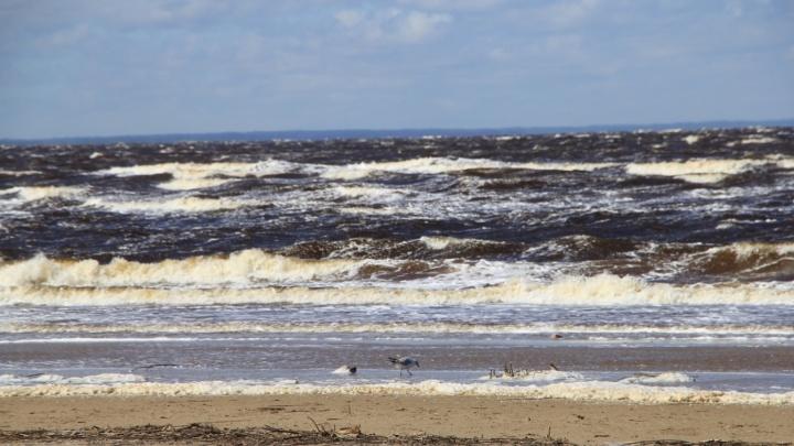 «Точно всё убрано»: с берега Белого моря вывезли понтоны, оставшиеся после взрыва у Нёноксы
