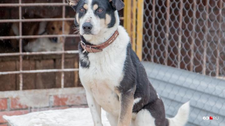 Убивать будут в крайнем случае: в Самаре выбрали подрядчика для отлова бездомных животных