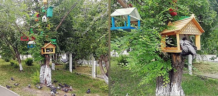 Красноярские дети устроили голубятню во дворе школы