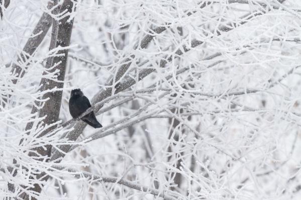 Морозная погода задержится в Самаре минимум до середины недели