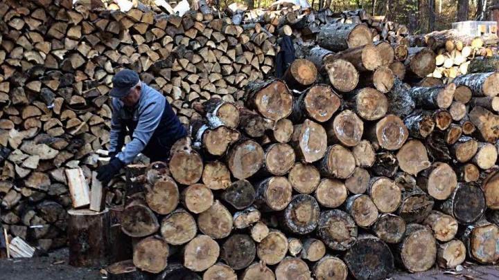 «Ничего криминального не произошло»: в заповедной зоне «Столбов» лес рубили на дрова