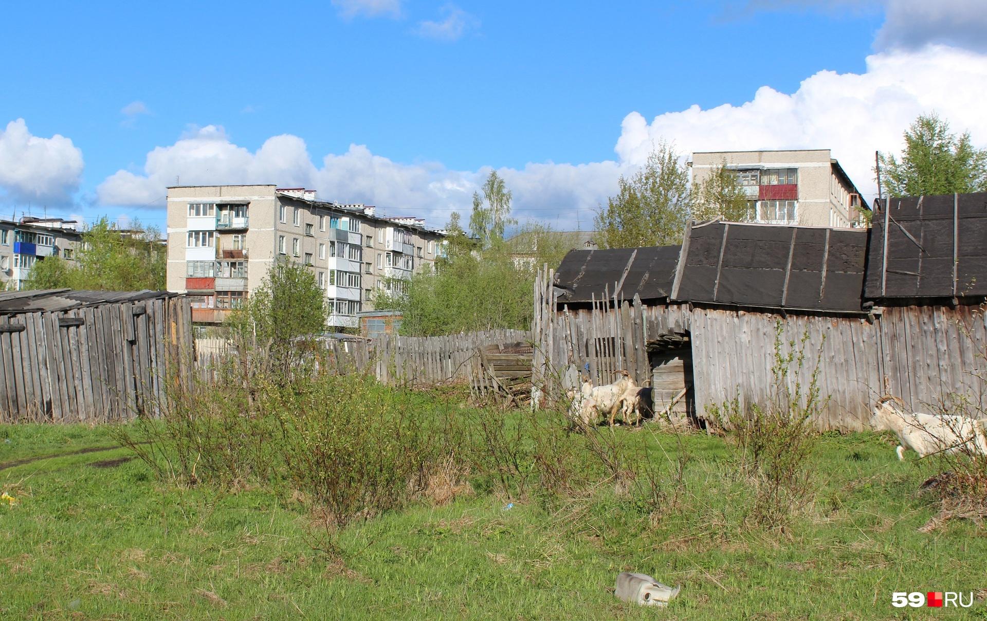 Вот сараи с овечками, а вот и полянка с бревном и ржавым остовом стиральной машины. Почти без мусора